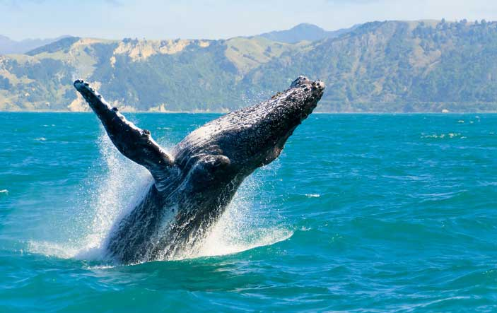 whale-watching-bodega-bay